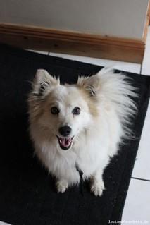 Tue, May 5th, 2015 Found Female Dog - The Local Area, Rathfarnham, Dublin