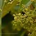 """Esta toma y las nueve que la preceden,son algunos detalles de la espectacular floración de un """"Aguacatero"""" en Portugalete-BIZKAIA by Mikel Huici - Nature & Scenes PHOTOGRAPHY"""
