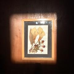 La luz del sol sobre un cuadro hecho por mi madre.