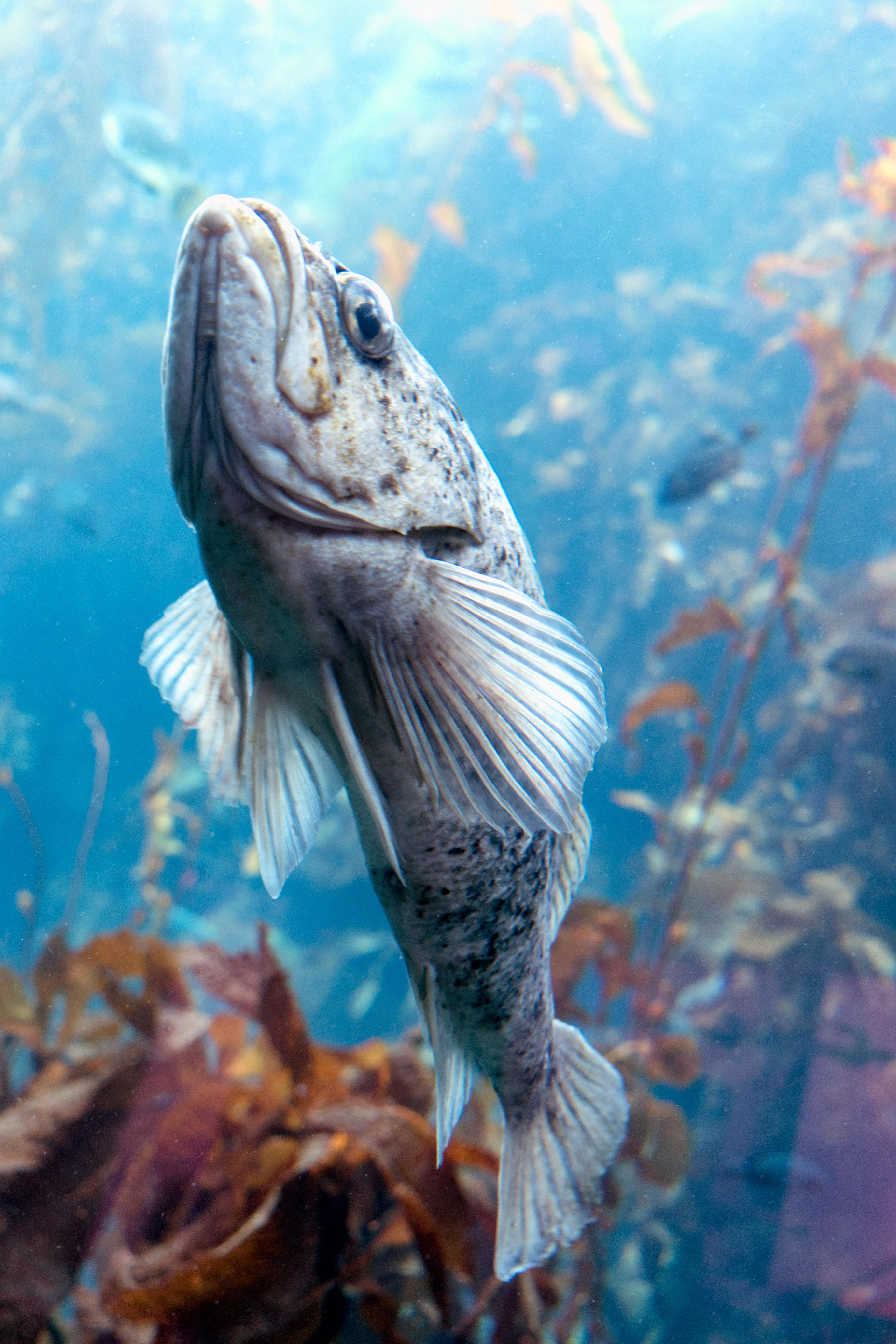 Fish swimming up flickr photo sharing for Fish swimming backwards