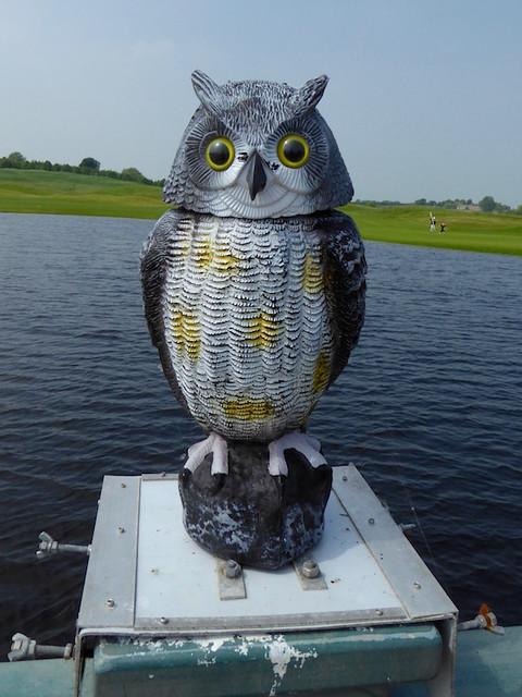 Owl on the golf course bridge