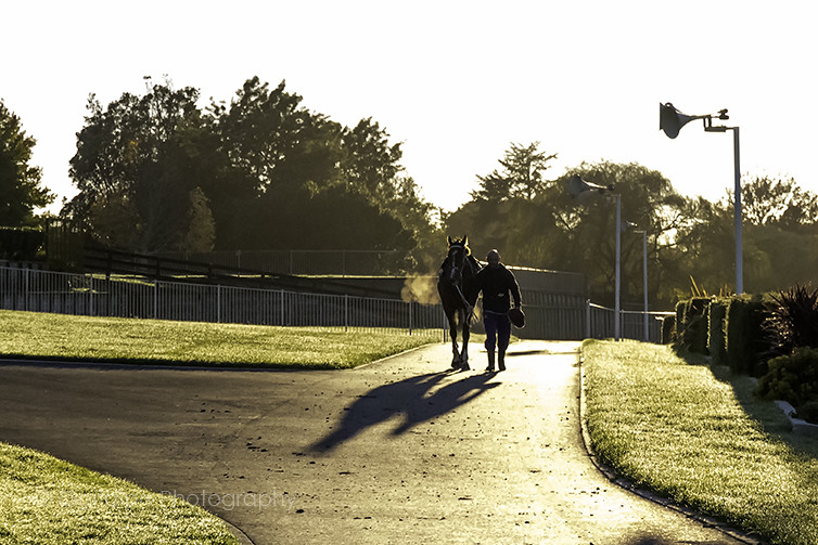 Tauranga Racetrack