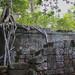 Ta Prohm Muro con arbol