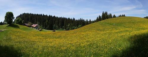 Hirschberg - Ahornach 3