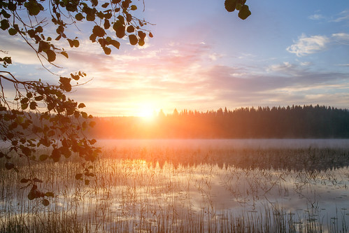 sunrise lake patajärvi suomi finland nikon d3100 nikkor 1755mm f28g trees sky forest water reflections morning fog mist clouds leafs nature naturephotography nikonphotography