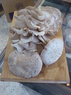 1P Mushrooms 910