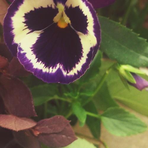 #spring #flowers #flowerstagram #Alabama
