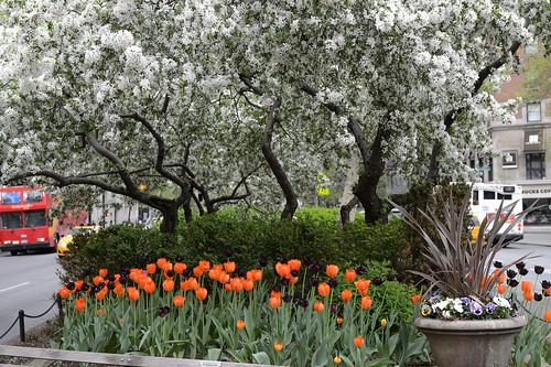 FilipWolak-LSBID-Tulips-6637