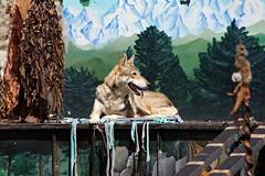 Soon & Shanka, Entre femmes et loups
