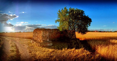 #landscape #relax #igers #igersalbacete #igerspain #field #tree #laroda #fuensanta