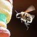Fliegende Honigbiene by UsualRedAnt