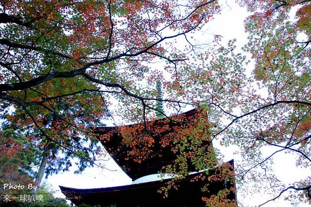 嵐山旅遊景點-常寂光寺38