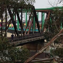 Joey Running over RR Bridge