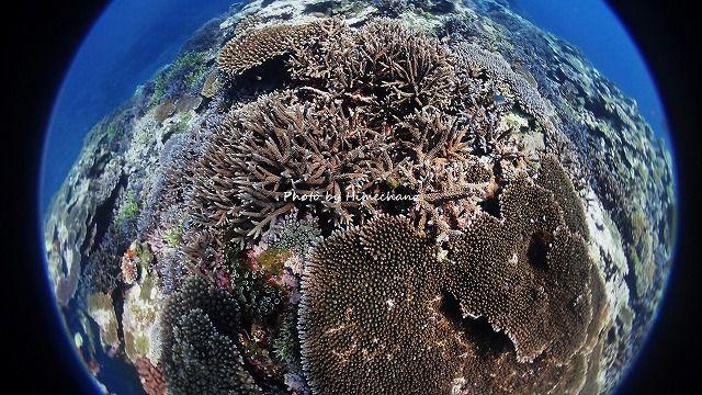 美しいサンゴ礁が広がります