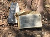 Bible Left in the Forest