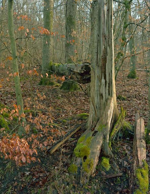 Forêt de Hambach