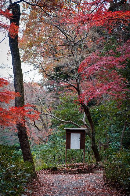 Meiji-Jingu Shrine Inner Garden