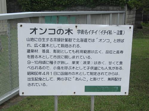 函館競馬場のオンコの木の説明