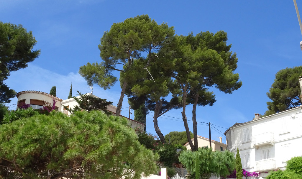 Baie de sanary provence alpes c te d 39 azur france for Best western soleil et jardin sanary