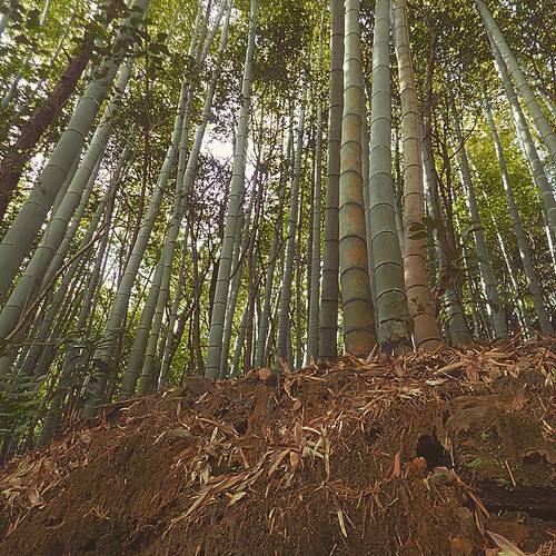#instagood #instagram #Japan #bamboo #nature #soil #green