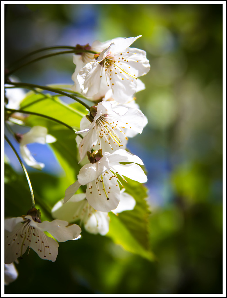 Another blossom shot.