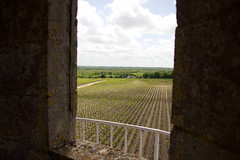 Window to the wine - Photo of Saint-Germain-d'Esteuil