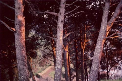 Fuego en las ramas