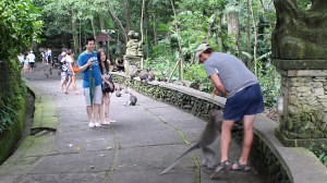 Other Tourists laughing as this monkey almost pants Tom.