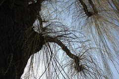 Trees / Bäume