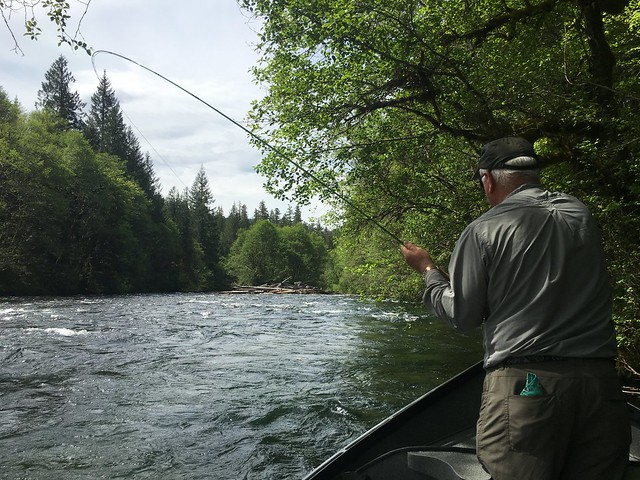 Spring fly fishing on the mckenzie river the caddis fly for Mckenzie river fishing