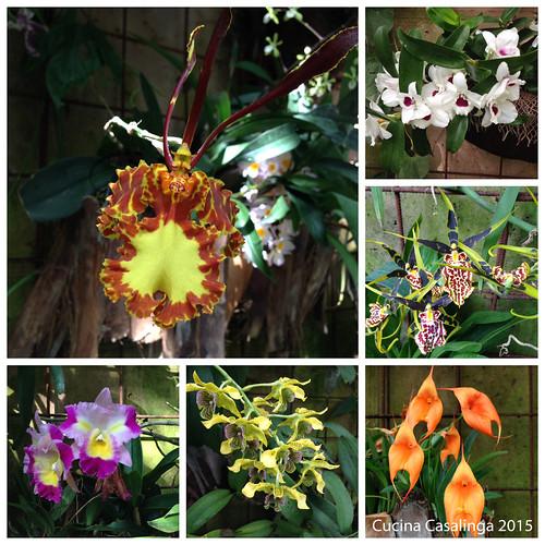 Trauttmansdorff Orchideen