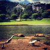 Capyvaras #capivara #capybara #capyvara #saopaulo #aguasdelindoia