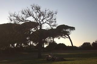 Parque Natural de la Breña. Barbate, Cádiz