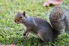 A squirrel in the garden