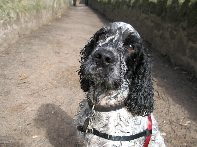 A soggy dog story, starring Spanner! | Emma Lamb