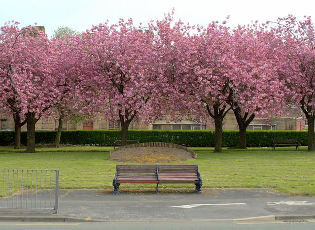 Pink Preston - 1