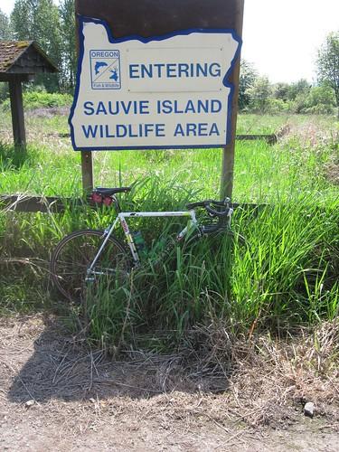A wild born-again Trek appears (Oak Island Road turnaround)