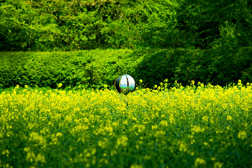 20150426-07_Cawston Bluebell Woods - Rape Seed Field
