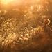 dandelion feeling.. by aleshurik