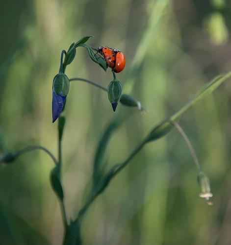 The ladybugs' bower
