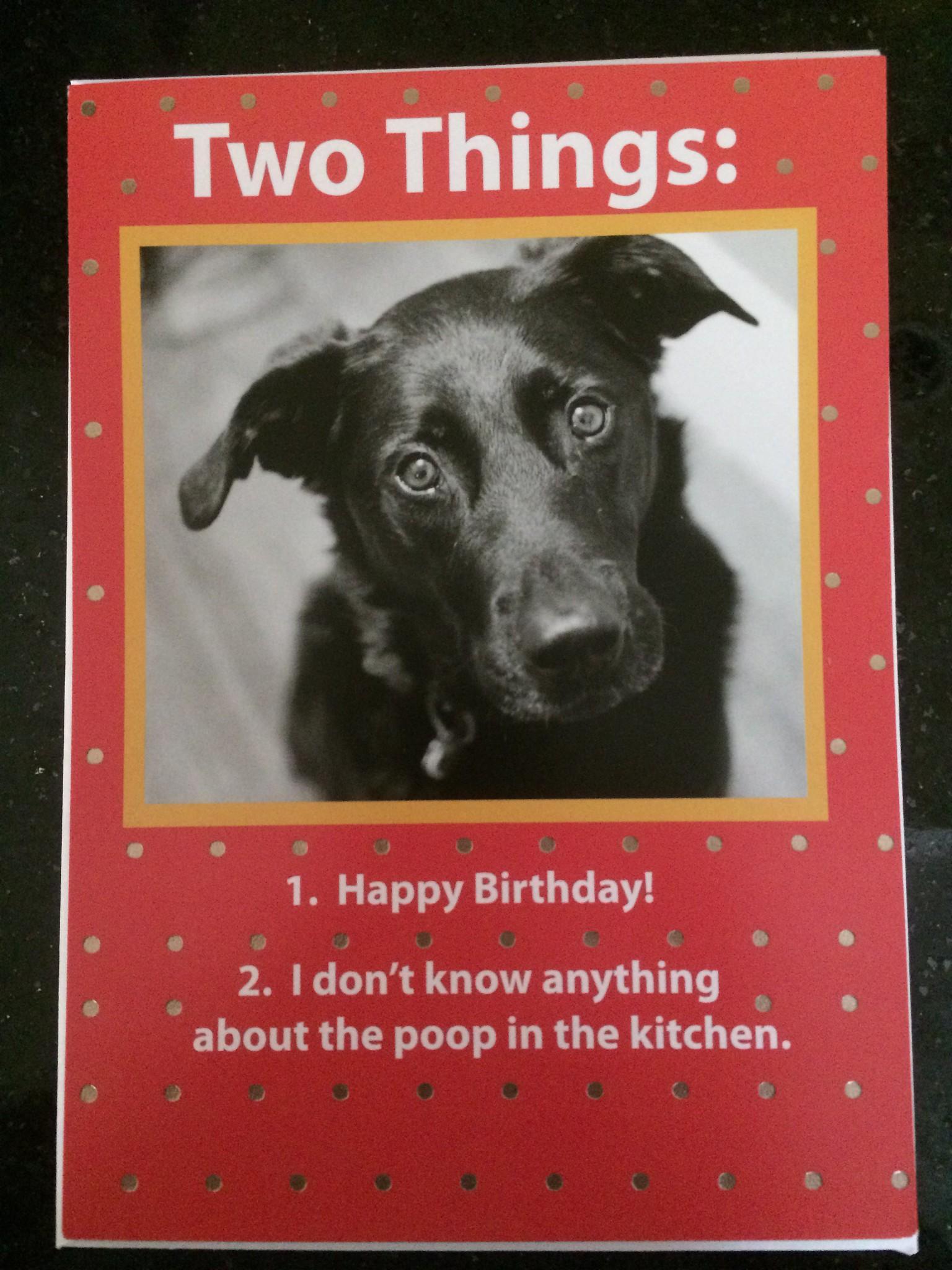 Dog Safe Birthday Cake Recipe