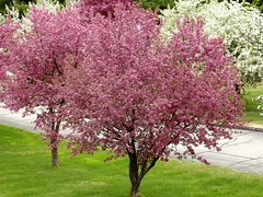 Spring Tree Colors