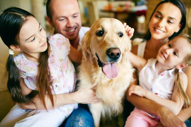 cuidar el pelo de un perros
