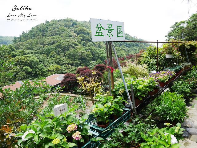 陽明山花季一日遊景點推薦 (2)