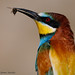 Merops apiaster by Manuel G.S.