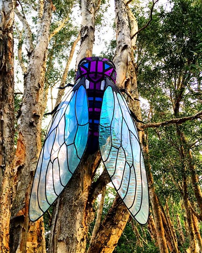 A rather large fly at the Taronga zoo during Sydney's Vivid festival on the weekend! #michfrost #sydney