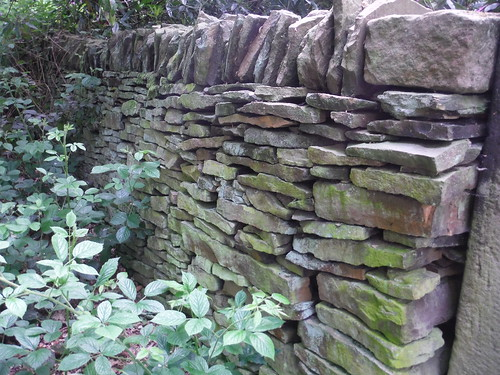 Drystone Wall in Ladies' Spring Wood