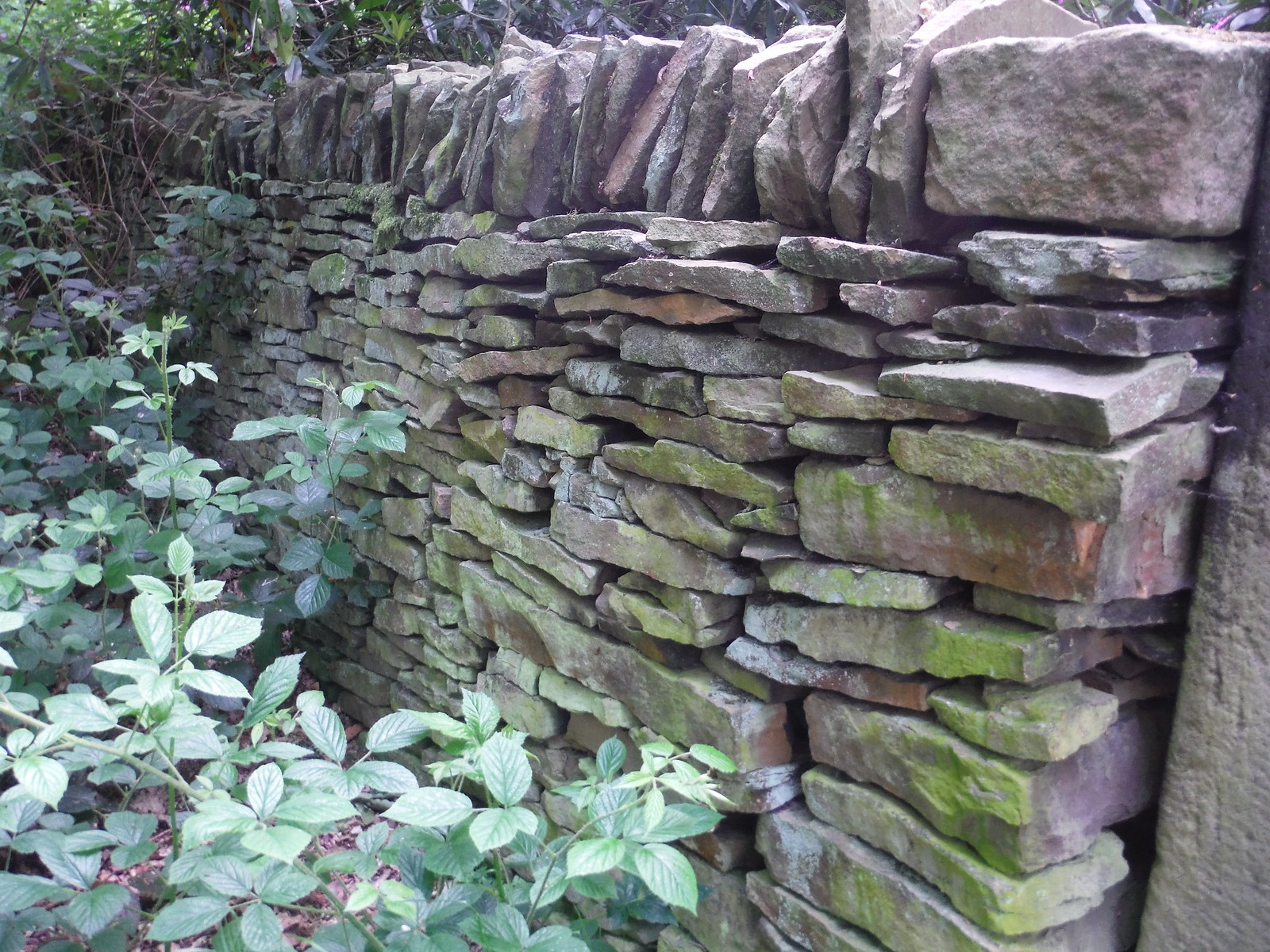 Drystone Wall in Ladies' Spring Wood SWC Walk 267 - Sheffield Circular (via Porter, Limb, Sheaf and Gleadless Valleys)