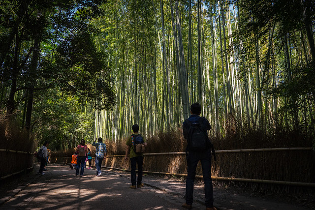 Sagano_BambooForest_02