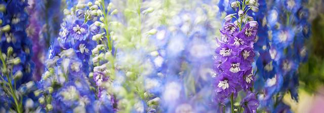 春季熱帶蘭花展